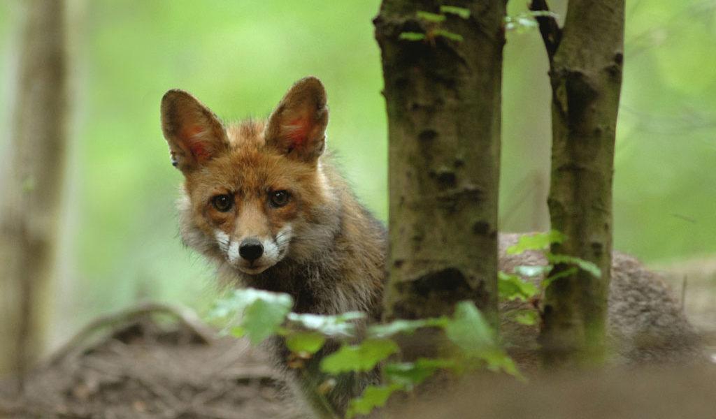 Wildtierbeobachtung1 - C Stefan KERER