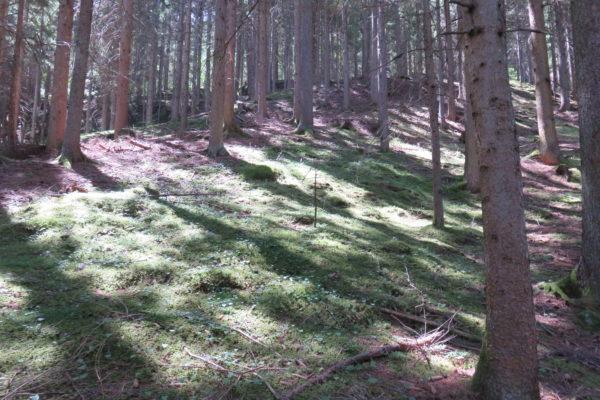 Launsberg8