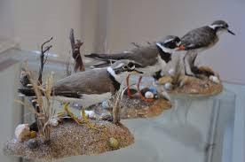 Vannis Vogelwelt