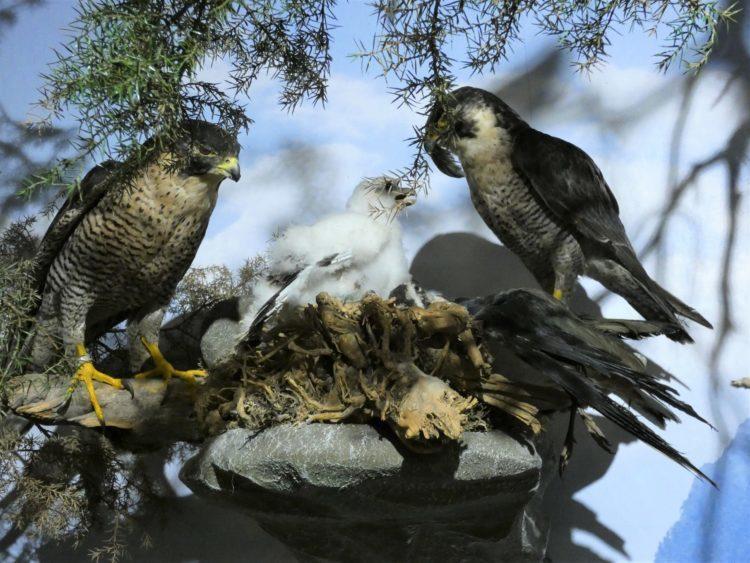 Vanni`s Vogelwelt 3
